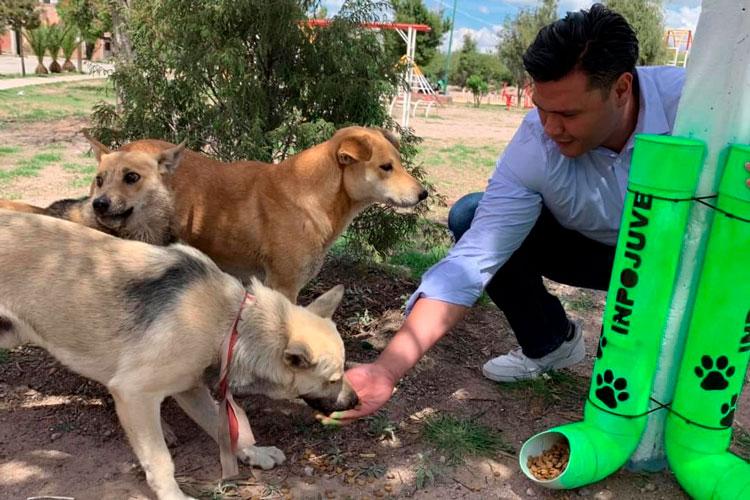 perros-callejeros-adopta-a-un-amigo.jpg