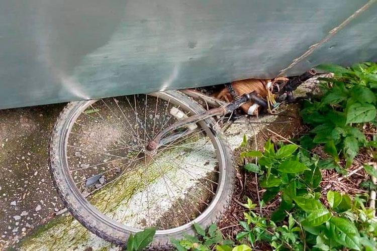 bicicleta-aplastada.jpg