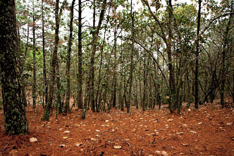 forestal.jpg