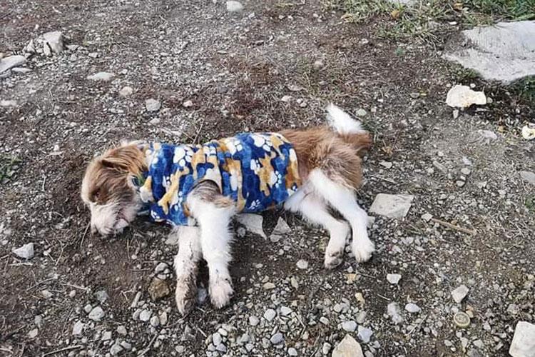 asesinan-perritos.jpg