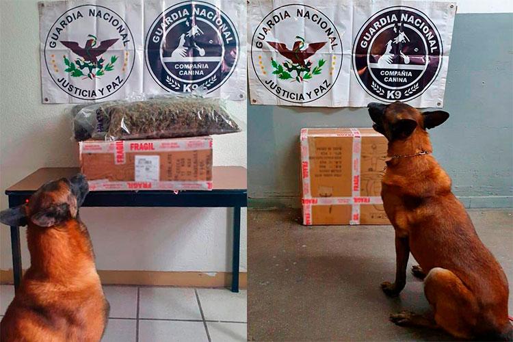canino-encuentra-droga-en-mercado.jpg
