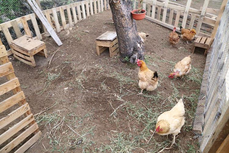 granjas-avicolas.jpg
